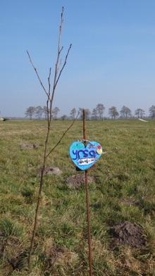 Bomen planten bij Noorder Poort
