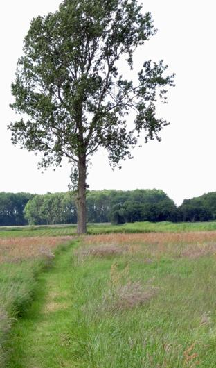 Erf Noorder Poort: boom