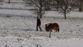 Tenjo met de ponies