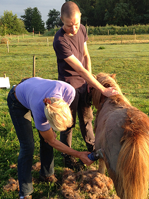 Pony Nina wordt geschoren